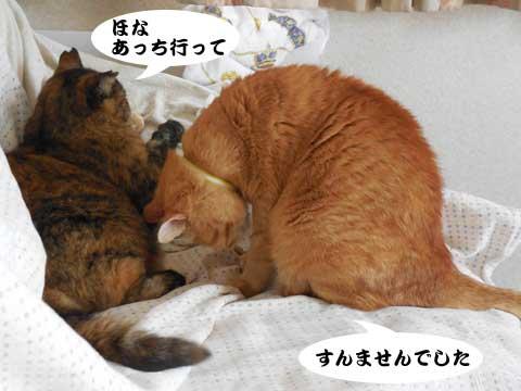 15_11_01_4.jpg