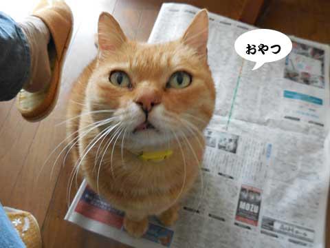 15_11_01_5.jpg