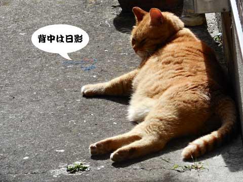 15_11_05_3.jpg