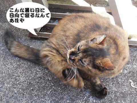 15_11_05_6.jpg