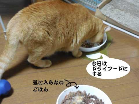 15_11_21_2.jpg
