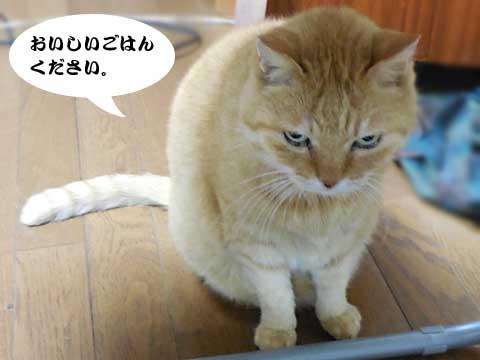 15_11_21_5.jpg