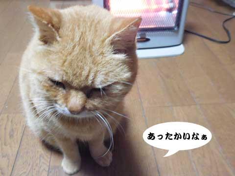 15_11_26_3.jpg