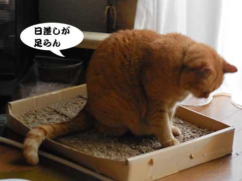 15_12_06_2.jpg