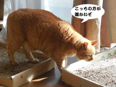 15_12_06_3.jpg