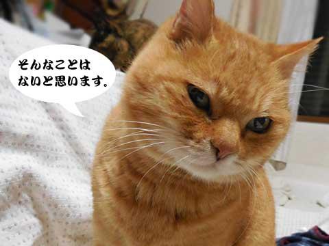 15_12_08_6.jpg