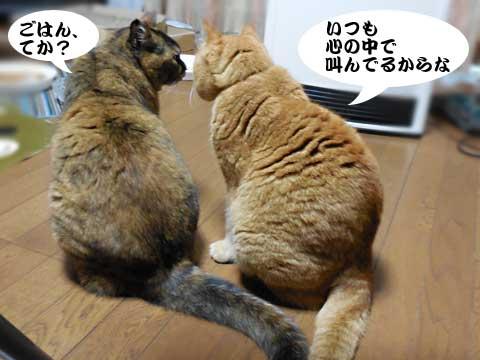 15_12_17_5.jpg