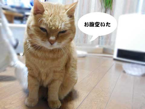 16_01_04_1.jpg