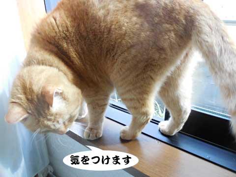 16_03_02_6.jpg