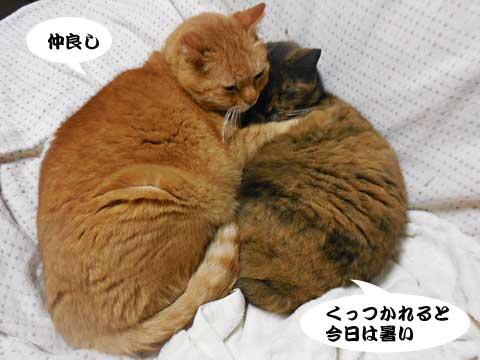 16_03_07_2.jpg