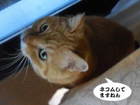 16_03_07_4.jpg