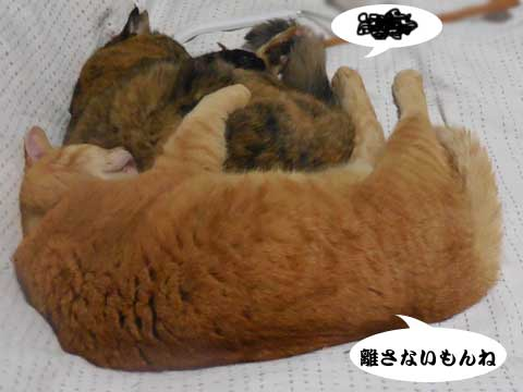 16_03_09_1.jpg