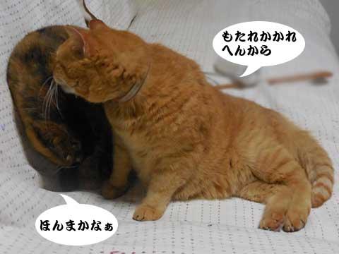 16_03_09_2.jpg
