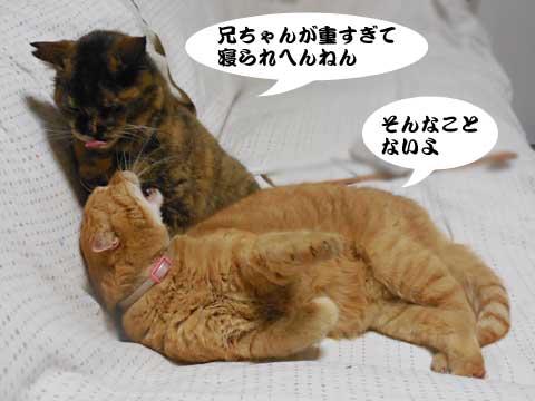 16_03_09_3.jpg