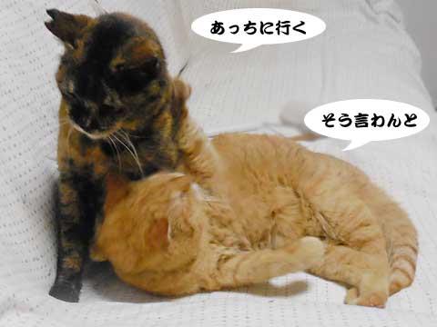16_03_09_4.jpg