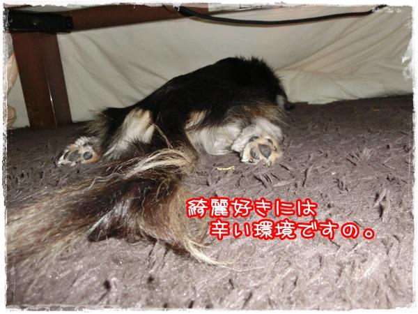 gochi3.jpg