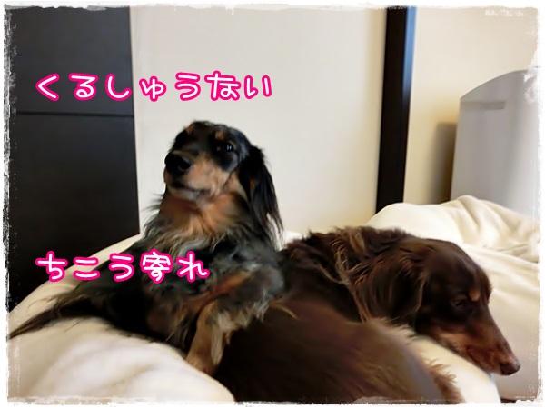 komono4.jpg