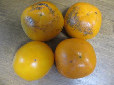 柿とトマト