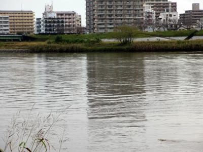 大淀川市民緑地