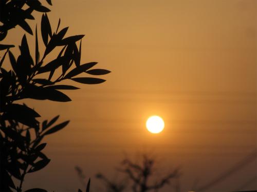 29日太陽