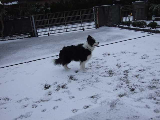 雪遊び期待はずれ