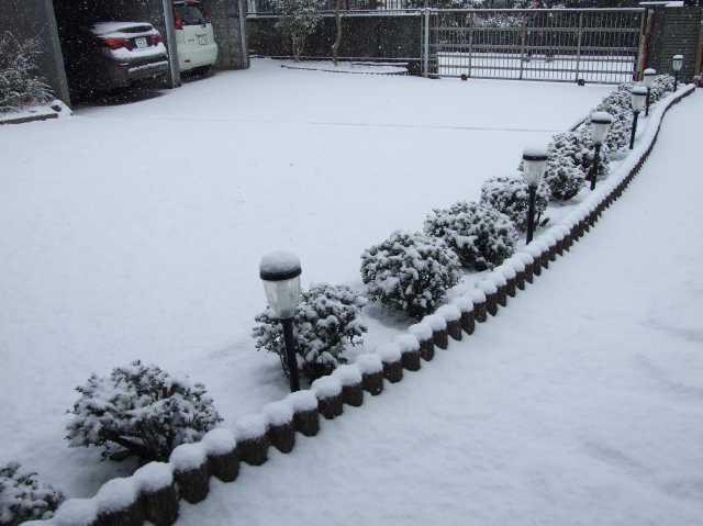 本格的な雪降りに・・・