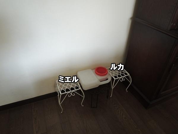 DSCN300420160205a.jpg