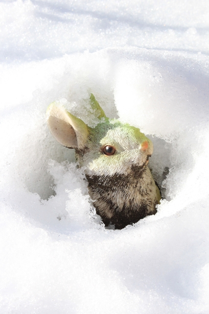 0120IMG_8281雪