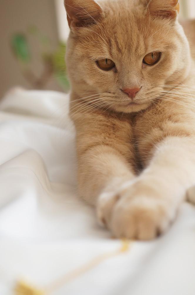 グリとラテュの猫ペンダント~真鍮バージョン♪