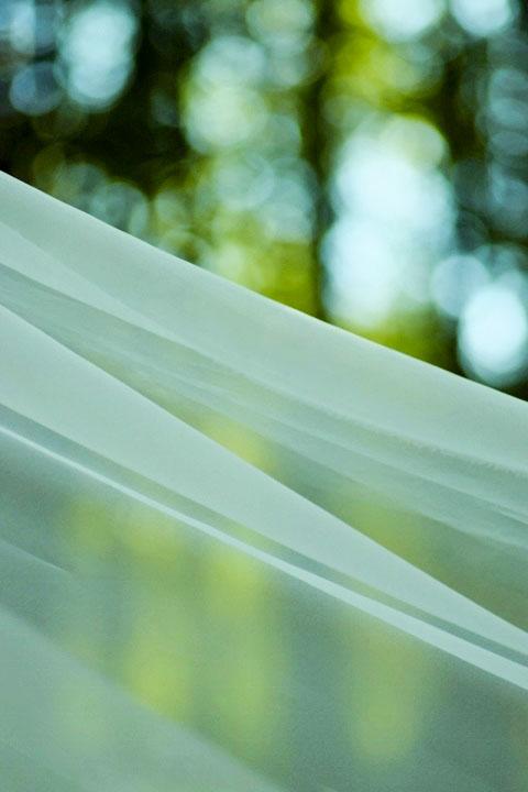 竹林とシルク