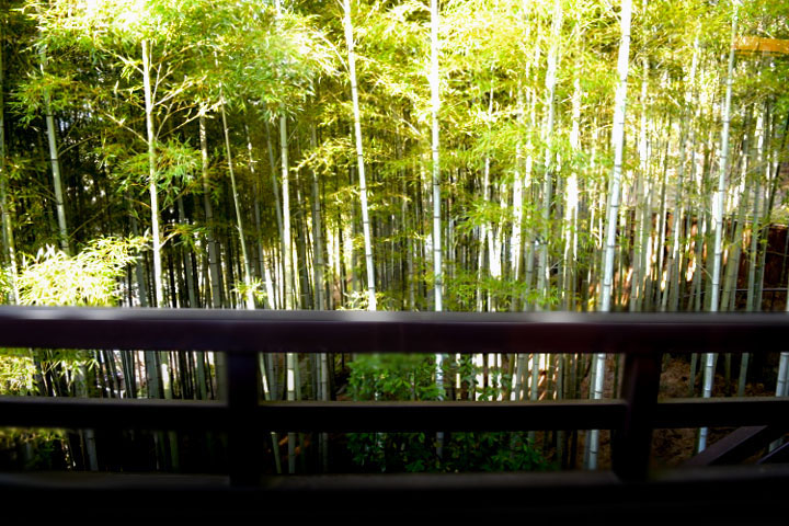 竹林と太陽