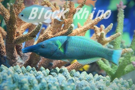 クギベラ01 マリホ水族館
