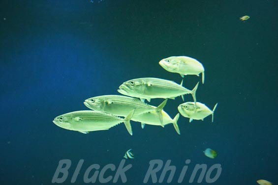 グルクマ01 マリホ水族館