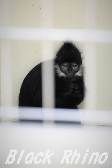 フランソワルトン02 浜松市動物園