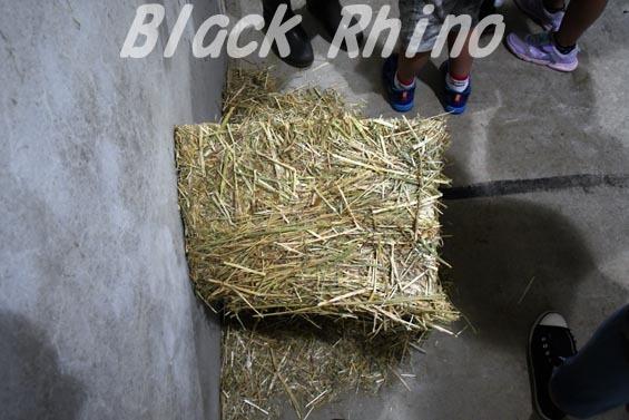 フタコブラクダ09 安佐動物公園