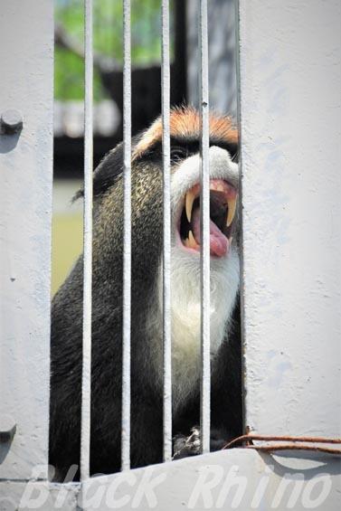 ブラッザモンキー01 安佐動物公園