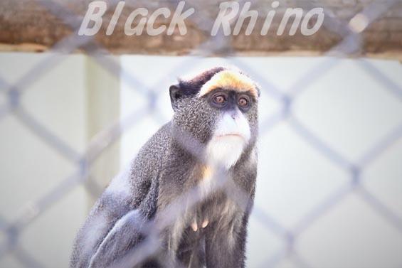 ブラッザモンキー02 安佐動物公園