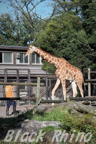 アミメキリン05 羽村市動物公園