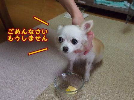 blog7170a.jpg