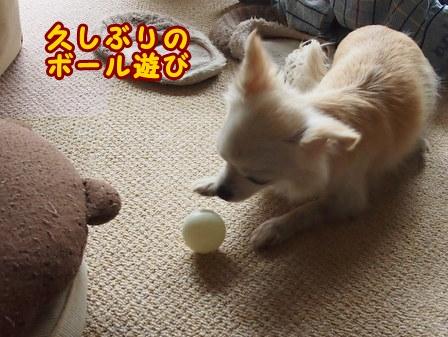 blog7298a.jpg