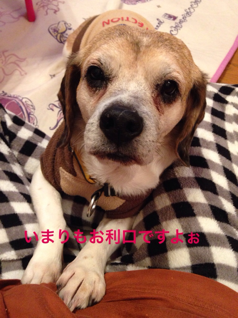 fc2blog_20160215220703287.jpg