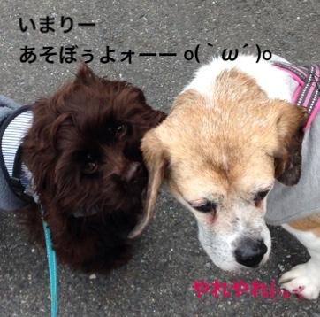 fc2blog_20160302002659fe5.jpg