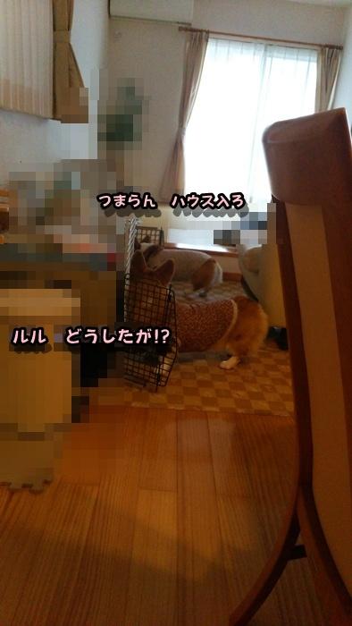 DSC_1065.jpg