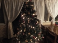 2013xmastree-web600.jpg
