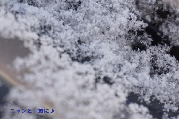 フロント雪