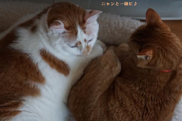 cyakomo118.jpg