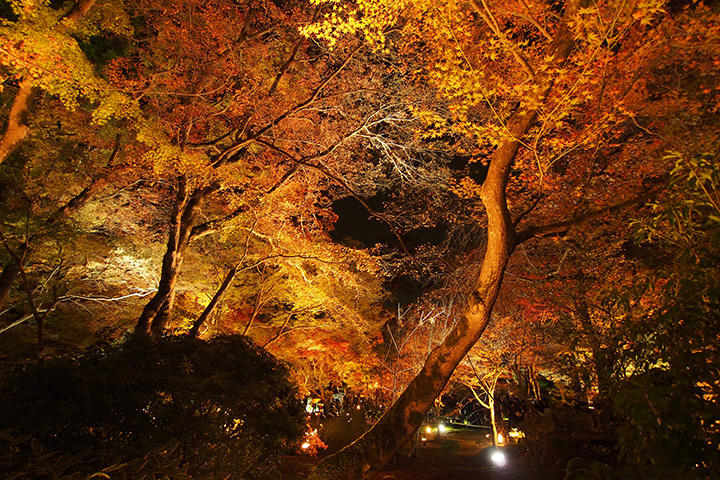 20151129_hogonin_temple-10.jpg