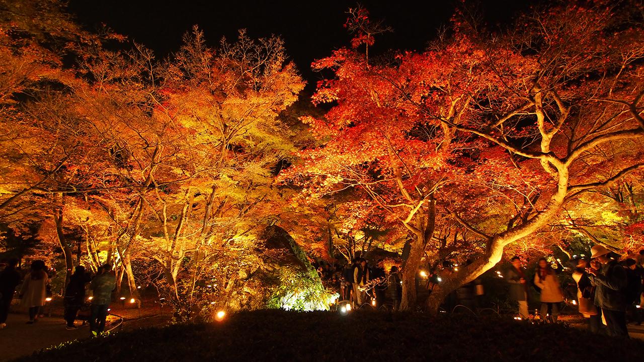 20151129_hogonin_temple-15.jpg