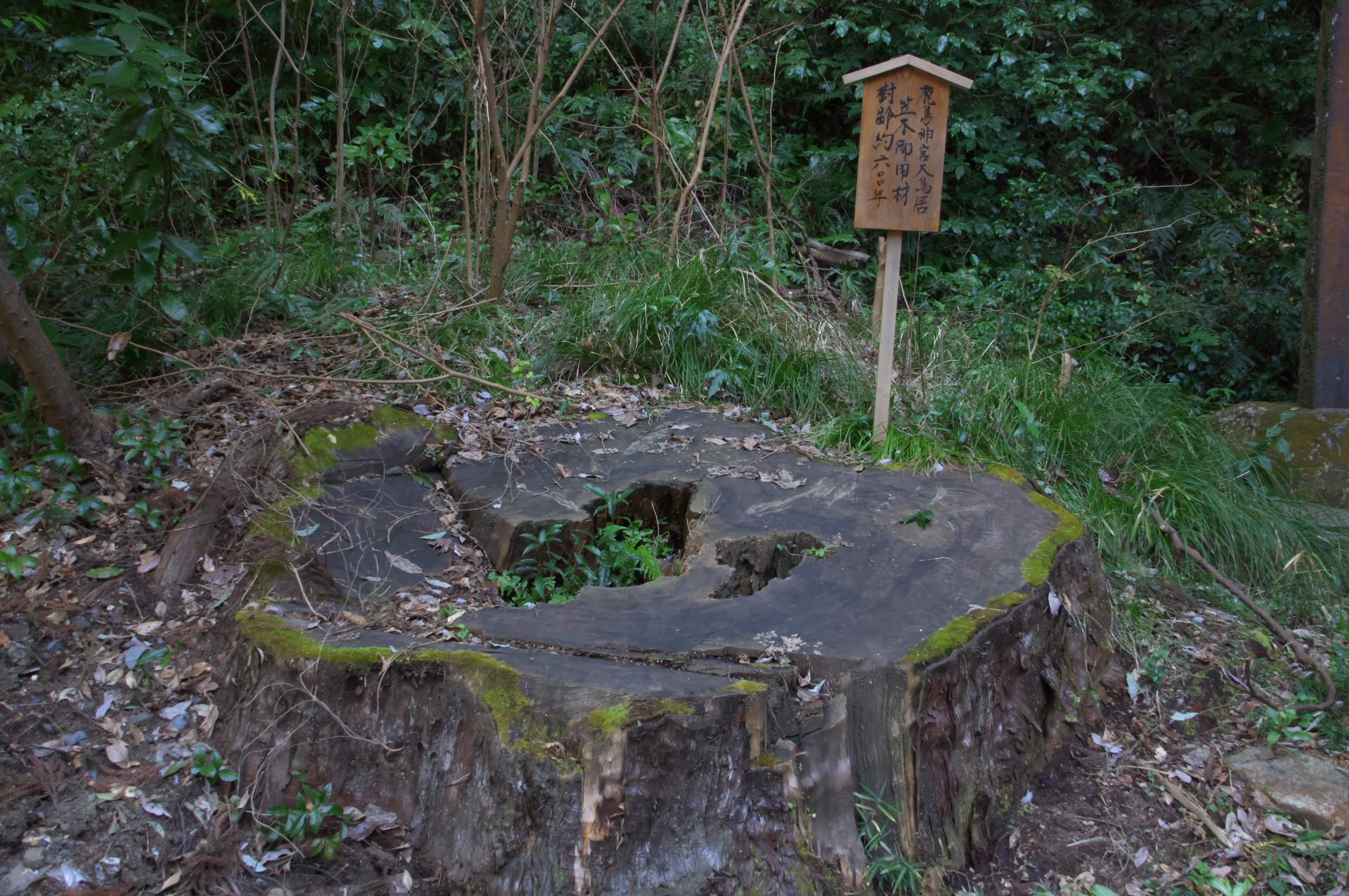 鹿島神宮大鳥居の大笠木となった御用材