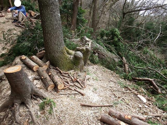 高安山森林整備に行ってきました!